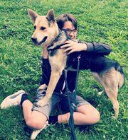 Hundemädchen Lapa sucht ein Zuhause