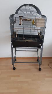 2Rotkäpchen mit Käfig