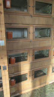 Kaninchen Meerschweinchenstall - 8 Boxen