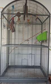 Pfirsichköpfchen Käfige