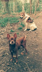 Hundebetreuung Urlaubsbetreuung