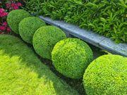 Gelertne r Gärtner in oder
