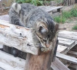 Katzen - Junges Kätzchen