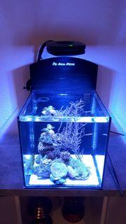 Meerwasser 36 L Mini Reef