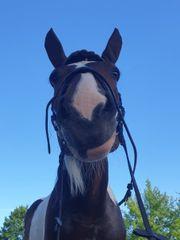 Pony reiten - geführtes Reiten