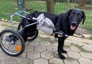 ALIJA Ein freundliches fröhliches Hundemädchen