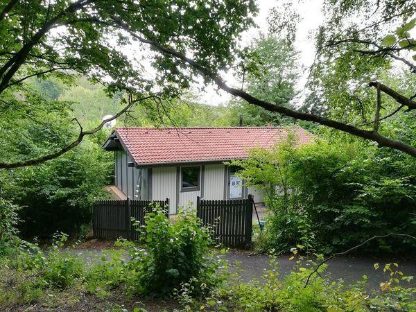 Ferienhaus Mau Wau - Waldhessen - Katzen