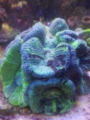 Verschieden Korallen Ableger