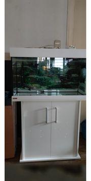 Aquarium zu verkaufen verschiedene Arten