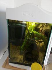 30l Süßwasseraquarium