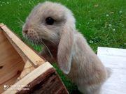 2 Kaninchen jeweils 2 Monate