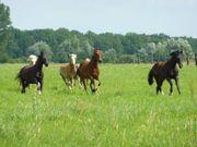 PferdepflegerIn Stallhilfe gesucht