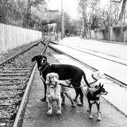 Dogwalker - Dogsitter aus den Bereich