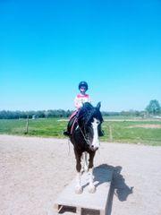 Kleine Reiterin sucht Pflege - Pony