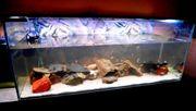 komplett Aquarium 130x50x50cm 325 Liter