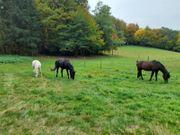 Weide Offenstallhaltung für 2-3 Pferde