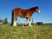 cooles Pony