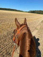 Reitbeteiligung Pferd sucht Mitreiter