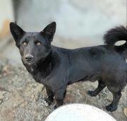 Hunde In Rodgau Kaufen Und Verkaufen Bei Quoka De
