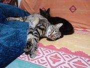 Ciro Pritsi liebe Katzenmädchen ca
