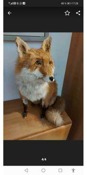 Fuchs und Eichhörnchen ausgestopft