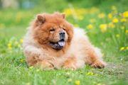 Hundehaftpflicht - Vergleich erstklassiger Tarife