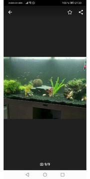 komplettes Aquarium zu verkaufen