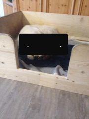 Welpenwurfbox Wurfkiste gebraucht