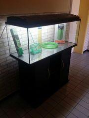Verkaufe 160 Liter Aquarium mit