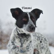 Frohnatur Timmi sucht sein Zuhause