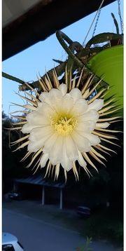 Kaktus Kakteen