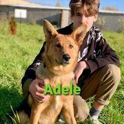 Welpe Adele sucht ihre Familie