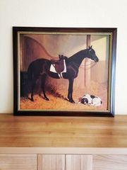 Bild Pferd Hund