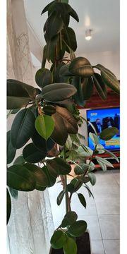 Zimmer Pflanzen