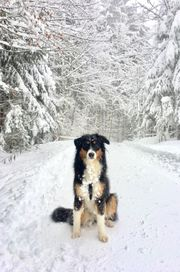 Suche regelmäßigen Hundesitter LK Rosenheim