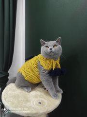Katze Hunde Pullover Zubehör handgemacht