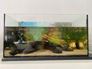 Aquarium inklusive Fische