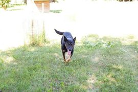 Rocky - Für seine Menschen tut: Kleinanzeigen aus Kirchzell - Rubrik Hunde