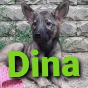 süße Hündin Dina sucht ihre