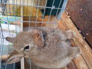 Kaninchen verkaufen