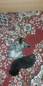 Zwei süße Katzenbabys suchen ein