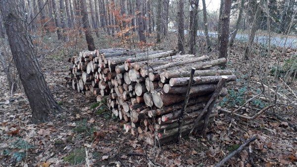 Brennholz Feuerholz