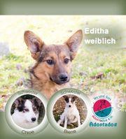 Editha II - gewöhnst du mir