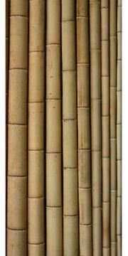 Bambusstangen Tonkin Pflanzstäbe ca 1 -