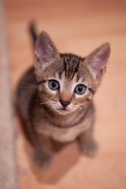 Kleine Kitten Kätzchen Katzen suchen