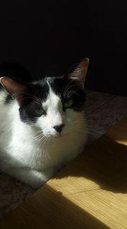 Katzenbub Pablo sehnt sich nach