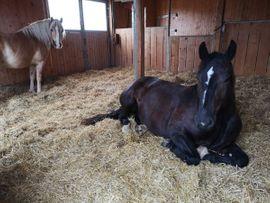 Pferdeboxen, Stellplätze - 2 Offenstallplätze frei