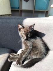 Katzenbabys Geboren am 11 7