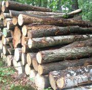 Brennholz Birkenstammholz mit Anlieferung
