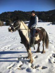 Scheck Pony